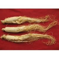 CHINESE White Ginseng root ,Panax Korean Bai Ren Shen, 白人参